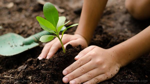 کمک به افزایش فضای سبز برای بهبود محیط زیست